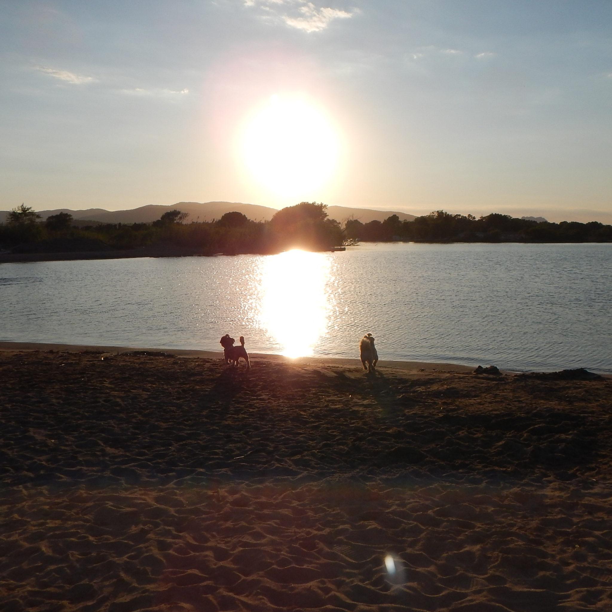 Esclamandes, plaża dla psów