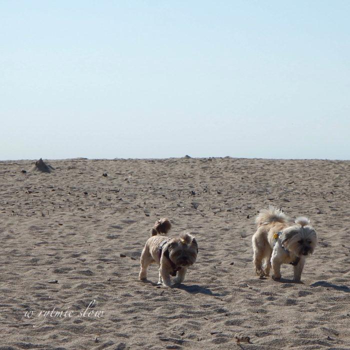 plaża dla psów