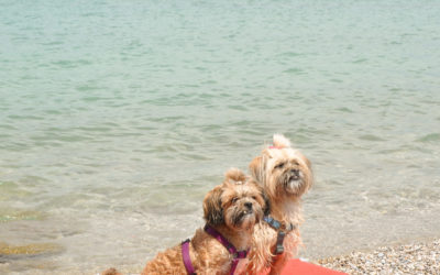 Braccobaldo Beach, czyli psi urlop na całego