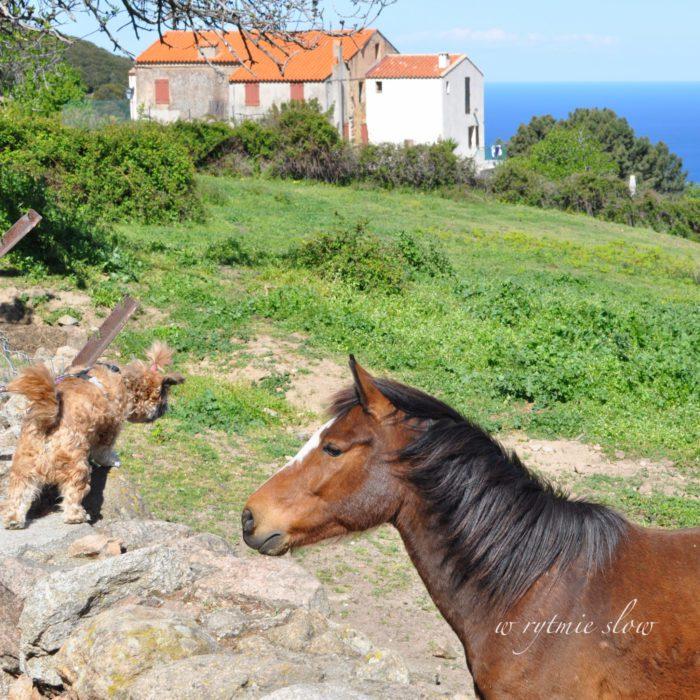 podróżowanie z psem Korsyka