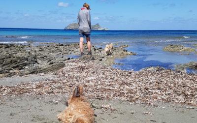 Podróżowanie z psem – 4 łapy na wakacjach