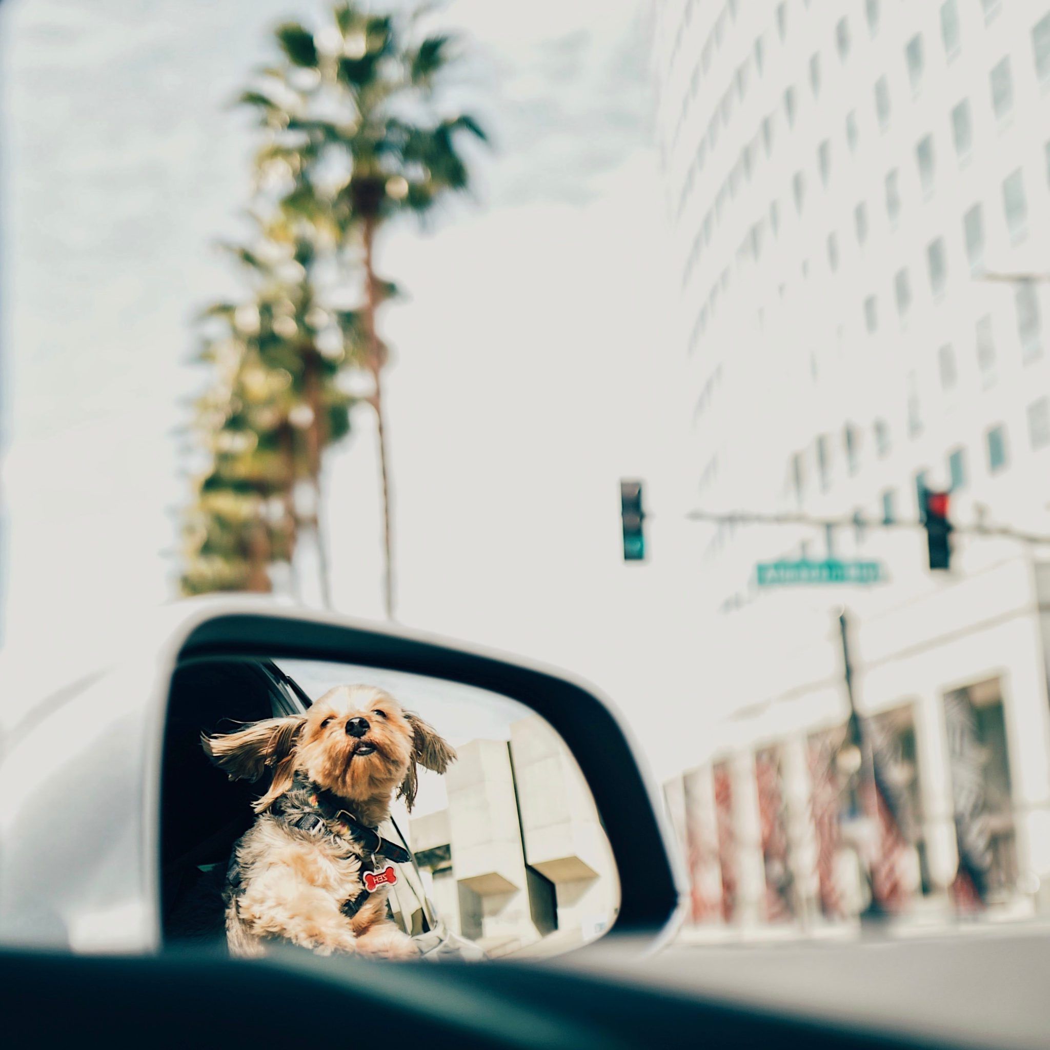 podróżowanie z psem z chorobą lokomocyjną