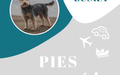 Makulscy, czyli z psem po Europie