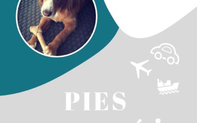 Góralka na walizkach – z psem do Dubaju