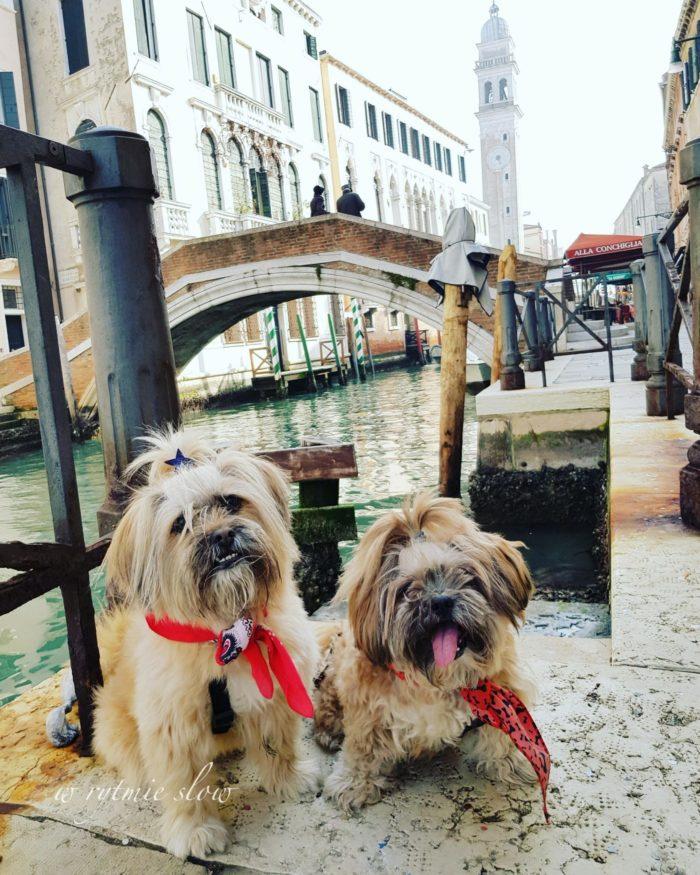 Wenecja z psem