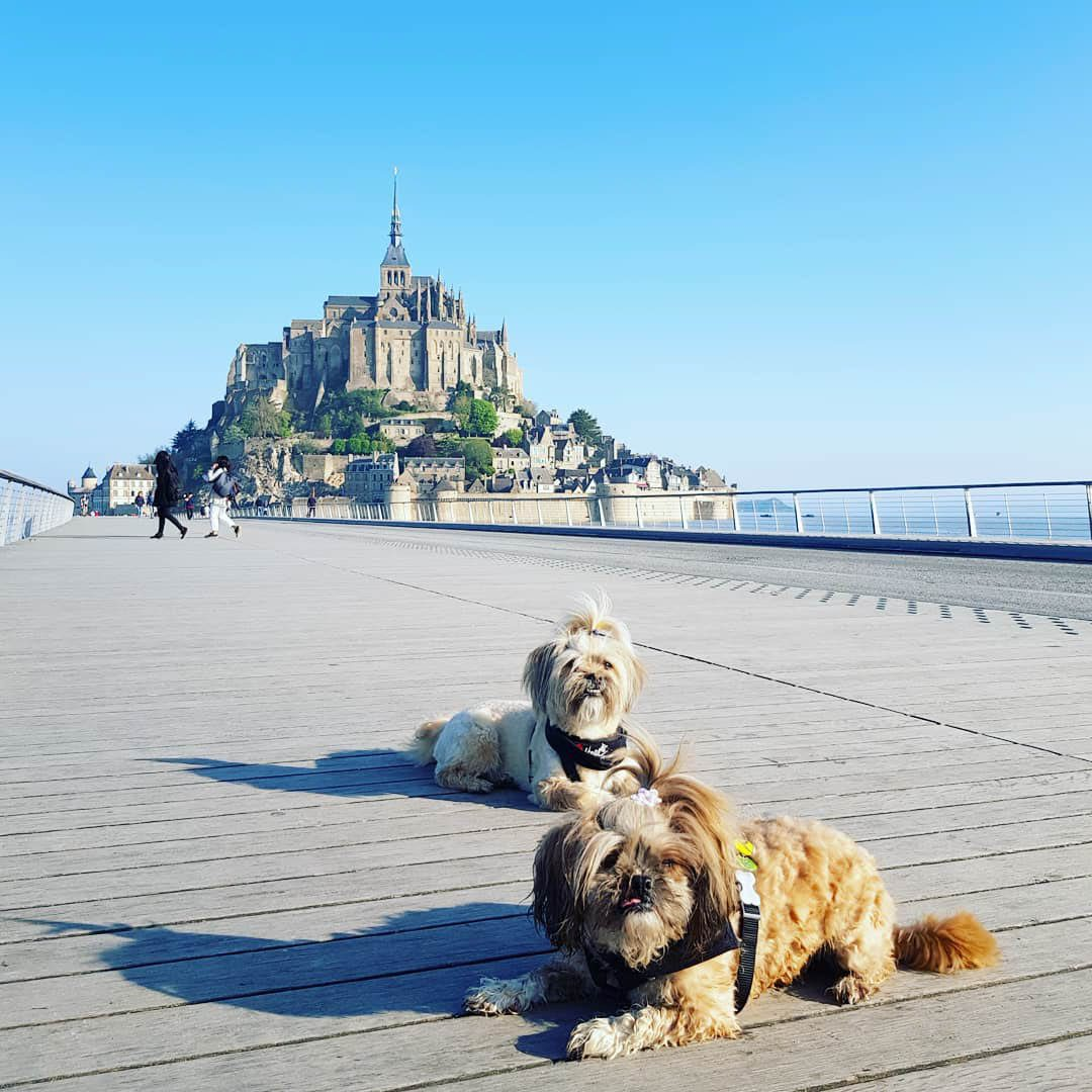 Mont Saint Michel z psem. Da się?