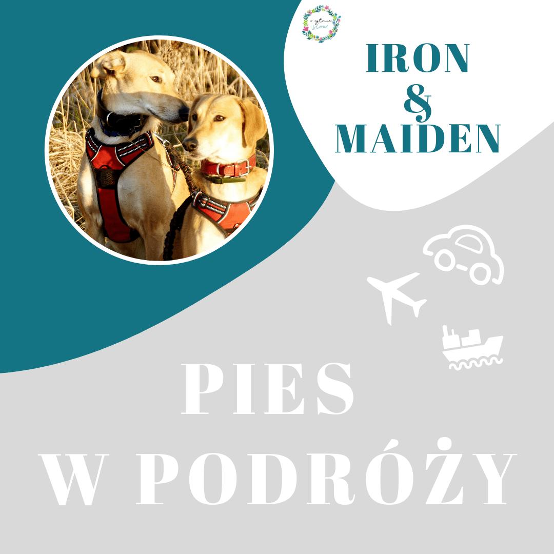 Habeo Canem, czyli Iron i Maiden w podróży