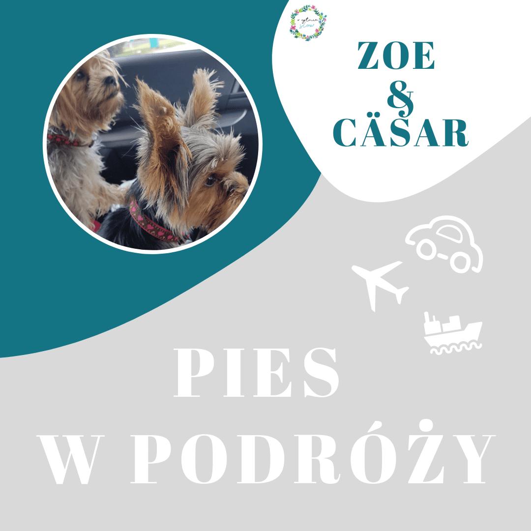 Lot z psem na Majorkę – Zoe i Cäsar