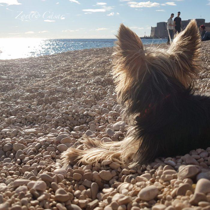 lot z psem na Majorkę
