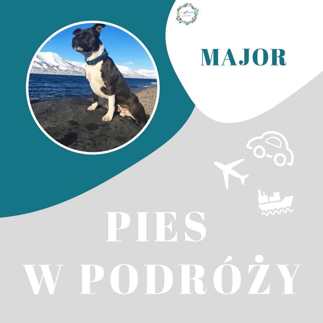 Staffik polarny, czyli pies na końcu świata