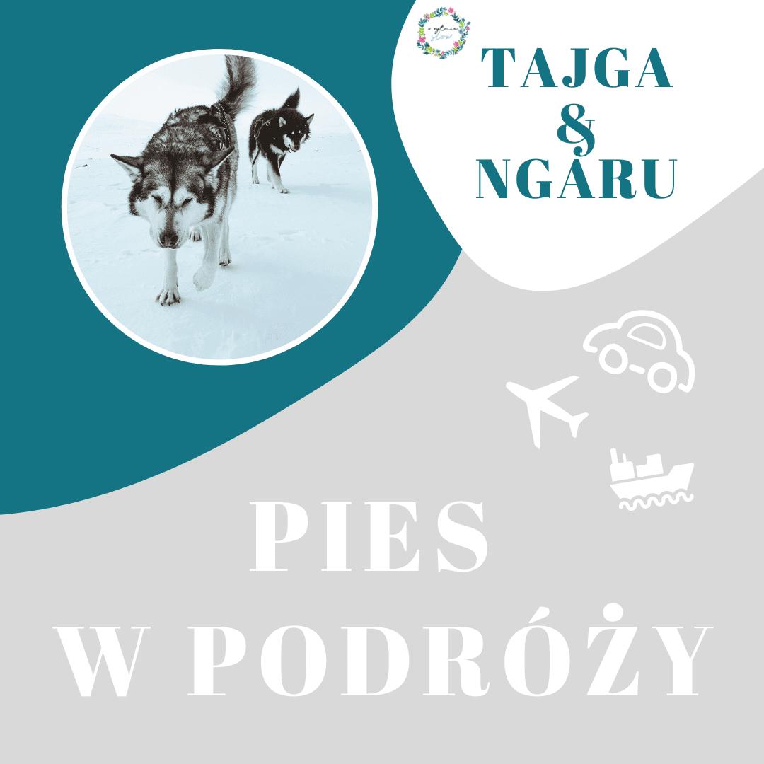 Hashtajga – z dwoma psami na biegun