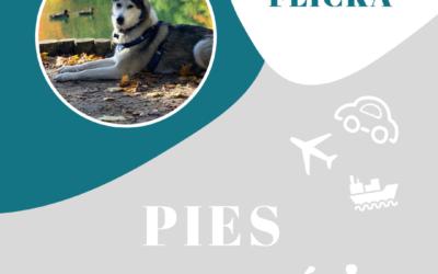 Podróże z psem i ciasteczkowy potwór