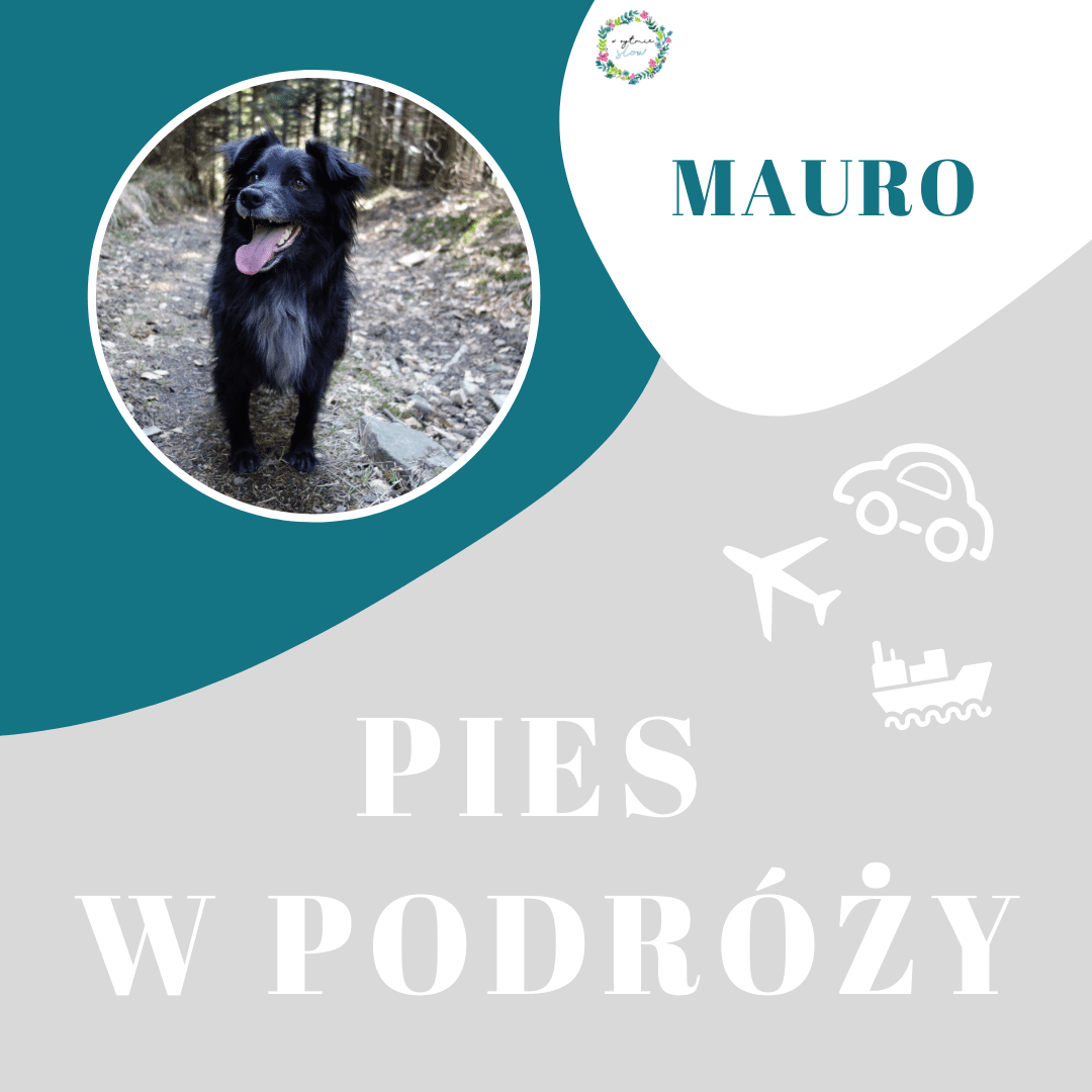 Mega pozytywny podróżnik Mauro i jego ludzie