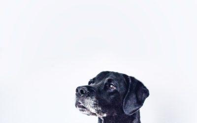 Behawiorysta – doświadczenia psich blogerów