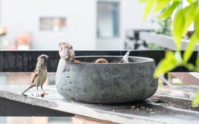 Karmienie ptaków zimą. Jak robić to dobrze?